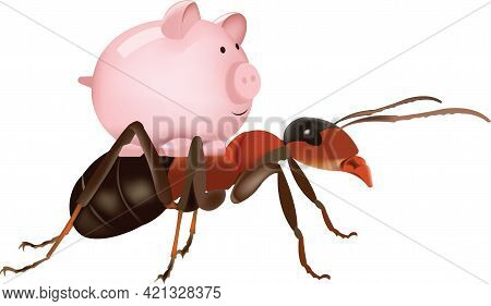 Red Ant Nature With White Background Red Ant Nature With White Background