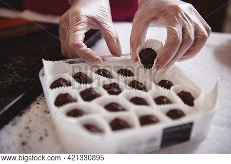 Closeup Of Chocolatier Hands In White Transparent Gloves Packing Chocolate Truffles In Box. World Ch