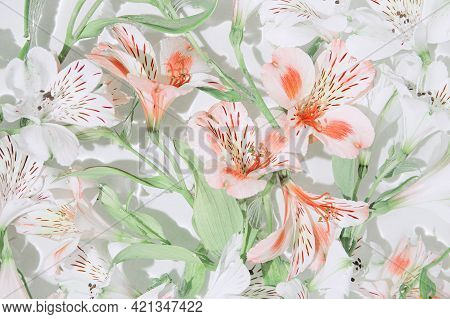 Alstroemeria Flowers In Water.  Summer Composition With Sun And Shadows. Nature Concept. Top View. S