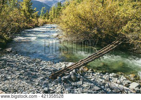 Scenic Landscape With Log Bridge Over Mountain River In Wild Autumn Forest In Sunshine. Vivid Autumn