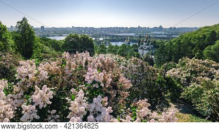 Aerial Top View Of Kiev City And Botanical Garden Park From Above, Blossoming Lilac And Kyiv Citysca