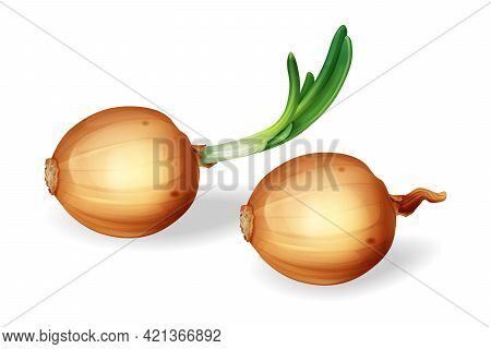 Vector Onion Bulb With Green Sprout Set. Realistic Yellow Unpeeled Whole Onions, Fresh Natural Organ