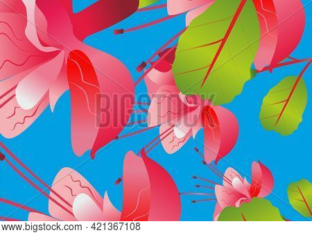 Pink fuchsia flower without background, on transparent background Fuchsia flower. Delicate fuchsia.