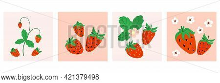 Strawberry Poster Or Print Set. Hand Drawn Fresh Forest Or Garden Berry Cards Collection. Juicy Berr