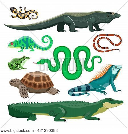 Reptiles And Amphibians. Lizard, Crocodile And Turtle, Snake And Iguana, Salamander And Frog, Chamel