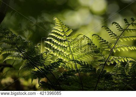Fern forest spring Nature background Close-up Nature green leaf Nature background Nature morning Nature background Macro Nature background sun Nature background lush fresh Nature background outdoors springtime Nature background Nature background.