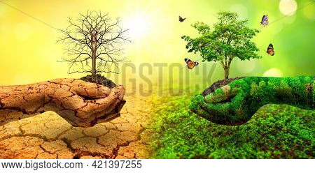 Tree In Two Hands  With Very Different Environments Earth Day Or World Environment Day Global Warmin