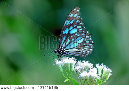 Butterfly Flower Images. Beautiful Butterfly On Blue Flowers..this Photo Contains A Beautiful Butter