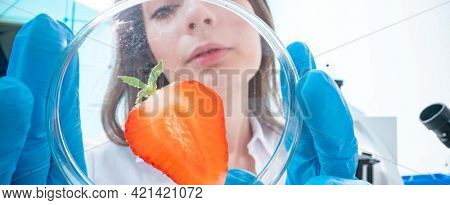 Quality inspection of agricultural food products. Checking the content of nitrates and herbicides in strawberries