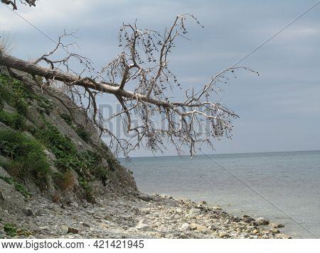 Loveliness Fallen Tree On A Steep Seashore