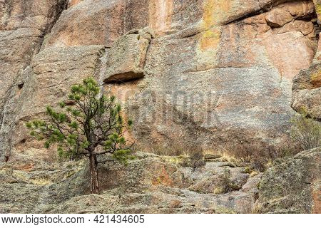 Detail Of A Steep Rocky Wall With Green Fir Trees In The Mountains. Paradise Cove Or Guffey Gorge Pa
