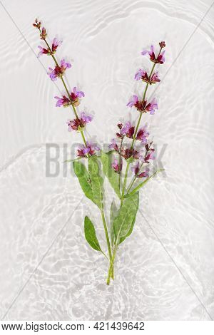 Beautiful Salvia Petals Macro With Drop Floating On Surface Of The Water Close Up. It Can Be Used As