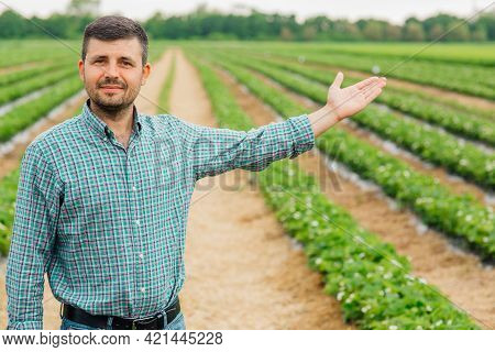 Portrait Of Young Farmer Standing In Strawberry Field With His Arms Outstretched. Farmer Male Lookin