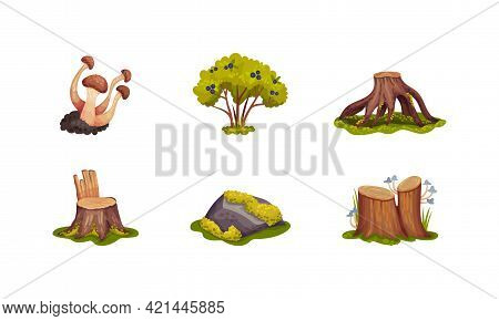 Forest Elements With Mossy Stump, Mushrooms And Trees Vector Set