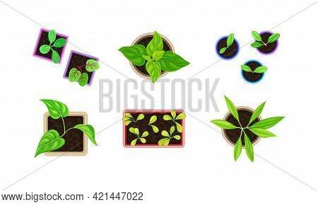 Seedling Or Young Plants Growing In Plastic Pots And Boxes Above View Vector Set