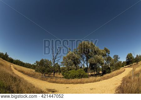 Branches In A Walking Track Through Bushland In The Australian Countryside Under A Clear Blue Sky, L