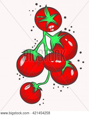 Cherry Tomatoes On A Branch. Vector. Small Red Tomatoes. Farming Tomato. Grow And Collect Healthy Fo