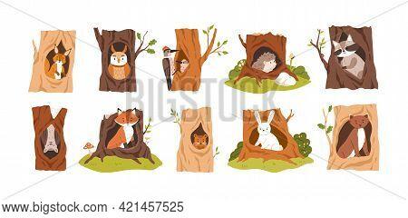 Set Of Animals And Birds Inside Hollows. Squirrel, Owl, Woodpecker, Hedgehog, Raccoon, Bat, Fox, Bea