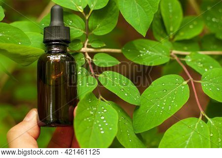 Brown Cosmetic Bottle: Face Serum Or Body Oil Among Green Leaves And Water. Cosmetology Mockup.