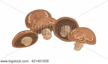 Brown Champignon Portobello With Whole Mushrooms. Fresh Edible Portobella Fungi Composition. Organic