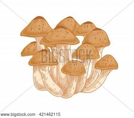 Armillaria, Honey Fungus Or Mushroom. Bunch Or Clump Of Organic Forest Fungi. Natural Raw Food. Colo