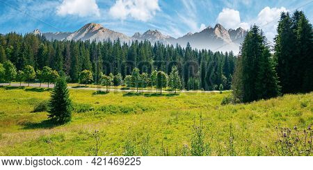 Composite Mountain Landscape In Summer. Spruce Forest Down In The Valley. High Peaks Of Rocky Tatra