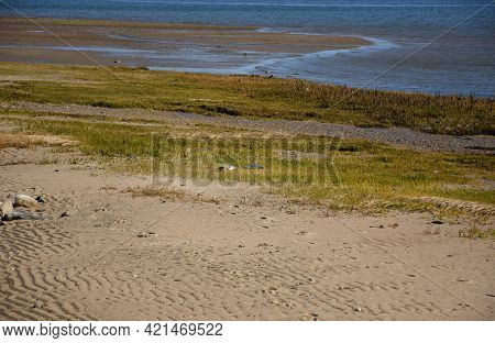 Saltwater Marsh Grass Growing On A Sand Beach.