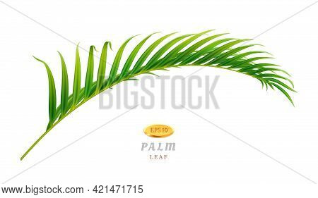 Tropical Leaves And Exotic Flora Palm Tree Of Jungles Or Forests In Warm Climate. Vegetation And Bot