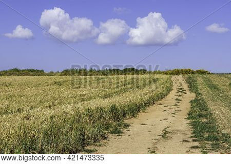 Rural Road To Agricultural Wheat Field On The Background Of The Sky With Clouds