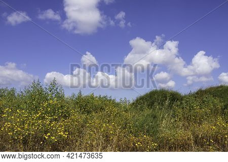 Yellow Flowers Among Green Shrubs On A Background Of Blue Sky With Clouds