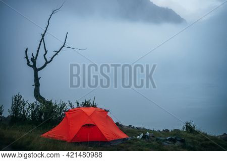 Atmospheric Minimal Foggy Landscape With Orange Tent In Eerie Place Near Dead Dry Tree In Dense Fog.