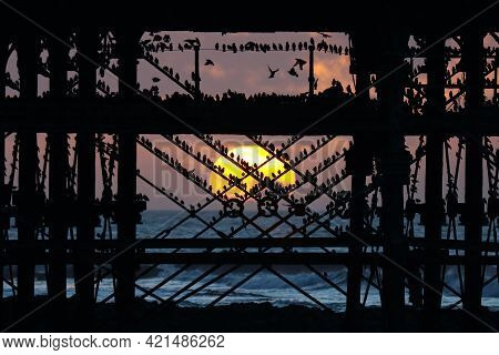 A Flock Of Starlings Gathering In The Struts Beneath Aberystwyth Pier As The Sun Sets Behind
