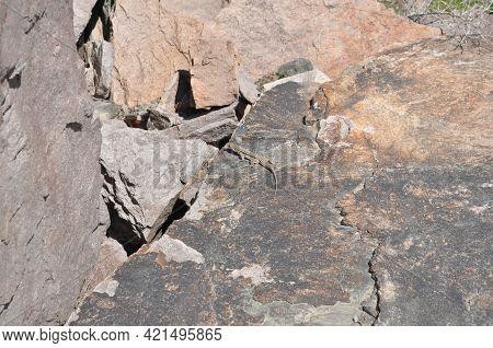 Steppe Lizard. A Lizard Basks On A Rock. Animals Of The Nature Of Kazakhstan.