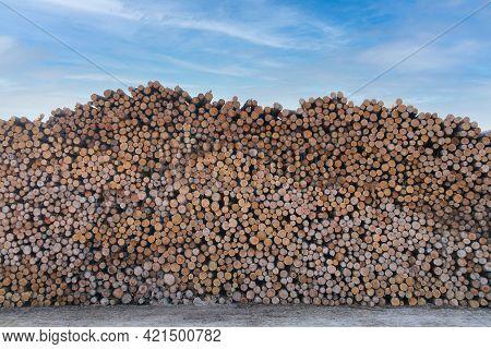 Large Huge Tall Stack Of Fresh Cut Lumber Trees At A Lumberyard Wood Cutting Yard