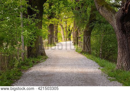 Path With A Tree Alley In The Forest