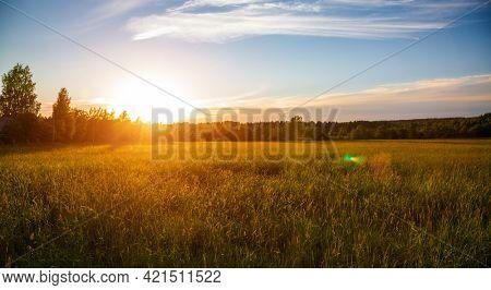beautiful sunset and green field