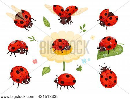 Red Ladybugs. View Nature Bugs Flying Summer Insects Macro Closing Nowaday Pictures Collection Isola