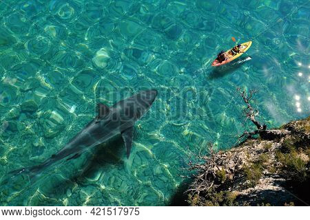 Top View Of Huge Great White Shark Swimming Next To Sea Canoe. Two Tourists Doing Kayaking On Crysta