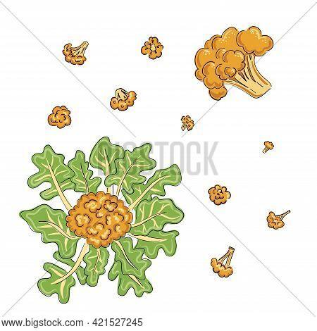 Cauliflower Orange And Yellow Drawn Cartoon In Sketch Style On Black Background. Hand Drawn Vector I