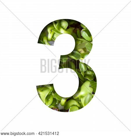 Font On Micro Greenery.the Digit Three, 3 Cut Out Of Paper On The Background Of Sprouts Of Fresh Bri