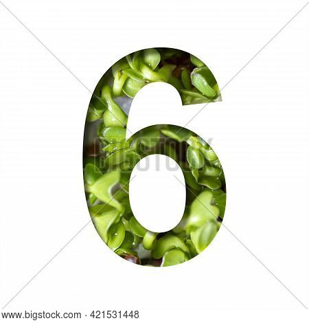 Font On Micro Greenery.the Digit Six, 6 Cut Out Of Paper On The Background Of Sprouts Of Fresh Brigh