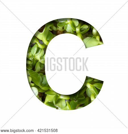 Font On Micro Greenery.the Letter C Cut Out Of Paper On The Background Of Sprouts Of Fresh Bright Mi