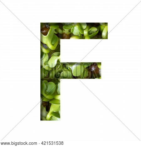 Font On Micro Greenery.the Letter F Cut Out Of Paper On The Background Of Sprouts Of Fresh Bright Mi