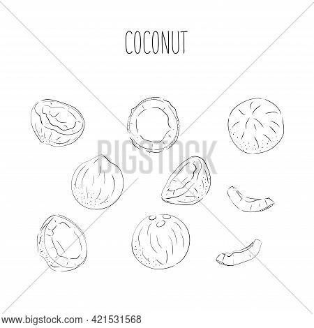 Coconut Set - Whole Nut Coconut Segment And Coconut Pulp. Half Tropical Fruit. Vector Illustration