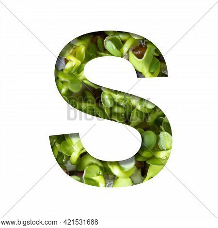 Font On Micro Greenery.the Letter S Cut Out Of Paper On The Background Of Sprouts Of Fresh Bright Mi