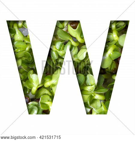 Font On Micro Greenery.the Letter W Cut Out Of Paper On The Background Of Sprouts Of Fresh Bright Mi