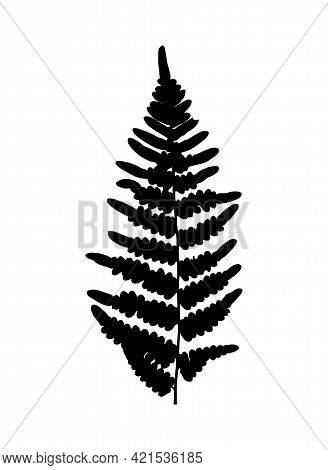 Vector Fern Leaf Silhouette Isolated On White Background