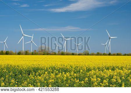 Yellow Rapeseed Field Panorama With Wind Turbine Or Wind Wheels.