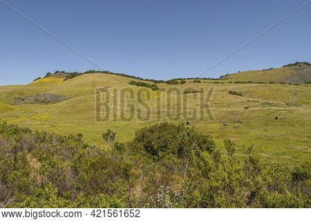 Santa Maria, Ca, Usa - April 8, 2010: Green Ranch Land East Of Los Padres Mountain Range, East Of Sa