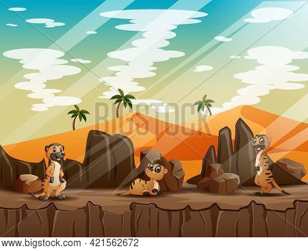 Happy Three Of Meerkats Playing On The Cliff